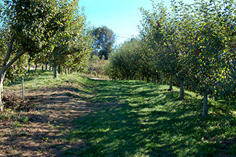 orchards_1