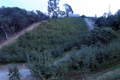 orchard_view1